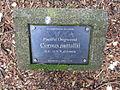 Laurelhurst Park, Portland - Pacific Dogwood plaque.JPG