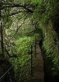 Laurissilva da Madeira 11.jpg