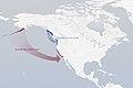 Leapfrog-migration Passerella iliaca.jpg