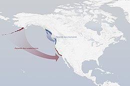 Leapfrog-migration Passerella iliaca