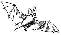 Lear 3 - Bat.jpg