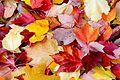 Leaves in Oregon.jpg