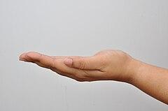 Left Hand - Kolkata 2011-04-20 2351