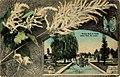 Lily Ponds, Tower Grove Park (NBY 428194).jpg