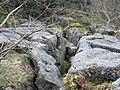 Limestone Pavement on Whin Scar - geograph.org.uk - 150649.jpg