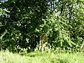 Linn Park trig point - geograph.org.uk - 932837.jpg