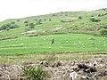Llech Idris seen across a clear felled plantation - geograph.org.uk - 474497.jpg