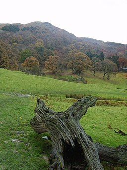 Loughrigg Fell - geograph.org.uk - 1038027