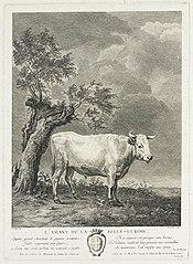 A White Bull