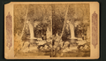 Lovers Cascade, Wildwood Canyon, California, from Robert N. Dennis collection of stereoscopic views 2.png