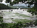 Low tide at Castle Pill - geograph.org.uk - 929189.jpg