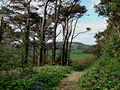 Lower path Langdon Hill - geograph.org.uk - 412641.jpg