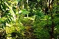 Lyon Arboretum - Aihualama Trail (8330364023).jpg