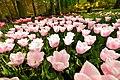 M^m Flores en el parque en la Haya - Creative Commons by gnuckx - panoramio (15).jpg
