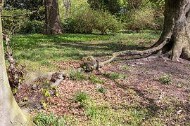 Münster, Park Sentmaring, Naturdenkmal -- 2015 -- 5716.jpg