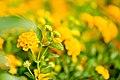 Macro Nature Flower Shots (211357705).jpeg