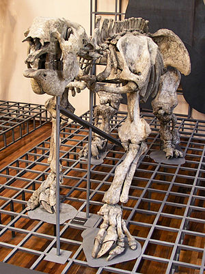 Megatherium - This specimen of M. americanum in Madrid, the first discovered (in 1788), was the first prehistoric animal skeleton mounted (in 1795).