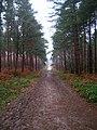 Main Track, Bixley Wood - geograph.org.uk - 335201.jpg
