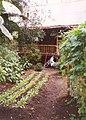 Malaysian garden, Eden Project , St Blaise CP - geograph.org.uk - 655346.jpg