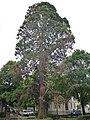 Mammutbaum Nord-West-Sicht.jpg