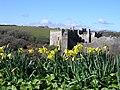 Manorbier Castle - geograph.org.uk - 844996.jpg