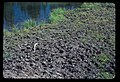 Many elk tracks at Clover Lake shore. 101981. slide (e7be1efbc1e74b41b6fce2ac2b030afb).jpg