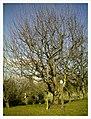 March Denzlingen - Master Season Rhine Valley Photography - panoramio (3).jpg