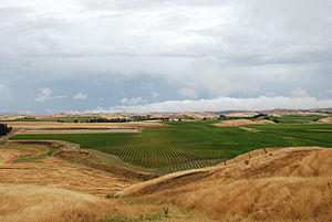 New Zealand wine - Large vineyards in Marlborough near Seddon