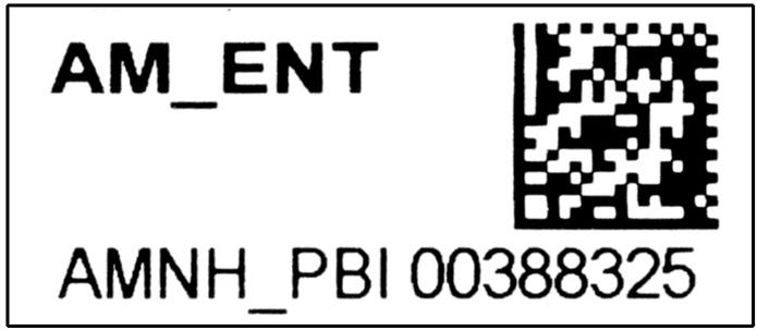 Matrix barcode AMNH PBI 00388325