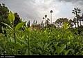 Mausoleum of Saadi Shirazi2021 33.jpg