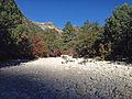 McKittrick Canyon 2013.JPG