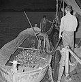 Met sardines gevulde visnetten worden binnen boord leeggeschud, Bestanddeelnr 255-2880.jpg