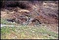 Mielec Garbage 20080209.jpg