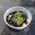 Mini moss garden 2.jpg