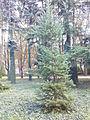 Mokotów - Park Dreszera - krzewy.jpg