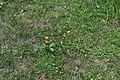 Monarch on milkweed open wings (45f5e49c-376f-438f-97b4-fdb3278d5fd9).JPG