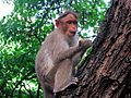 Monkey- The unexpected visitor.jpg