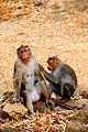 Monkey Acts.jpg