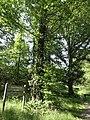Mont-Saint-Jean (Sarthe) forêt domaniale de Sillé.jpg