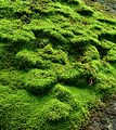Mossy cliff face (5763681190).jpg