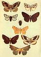 Moths of the British Isles Series2 Plate134.jpg