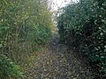 Muddy bridleway - geograph.org.uk - 1043199.jpg