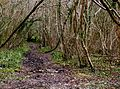 Muddy track through the woods - geograph.org.uk - 1206895.jpg