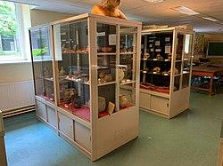 Musée de Préhistoire de l'Université de Liège, vitrines, vue n°1.jpg