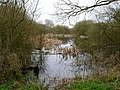 Muslins Pit - geograph.org.uk - 152374.jpg