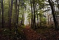 Mystic forest on a foggy day in autumn in Ajdna.jpg