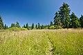 Národní přírodní rezervace Bukačka, okres Rychnov nad Kněžnou (03).jpg