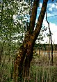 NSG Großer Gollinsee- Uckermark bei 17268 Templin.jpg