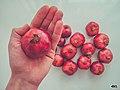 Nar pomegranate svln4821 in my hand pink.jpg
