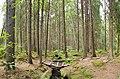 Nastola - forest 2.jpg